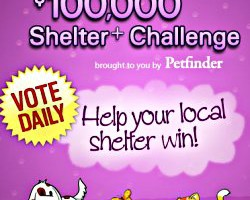 Seattle Animal Shelter needs your help