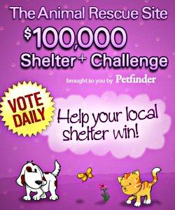 shelter challege